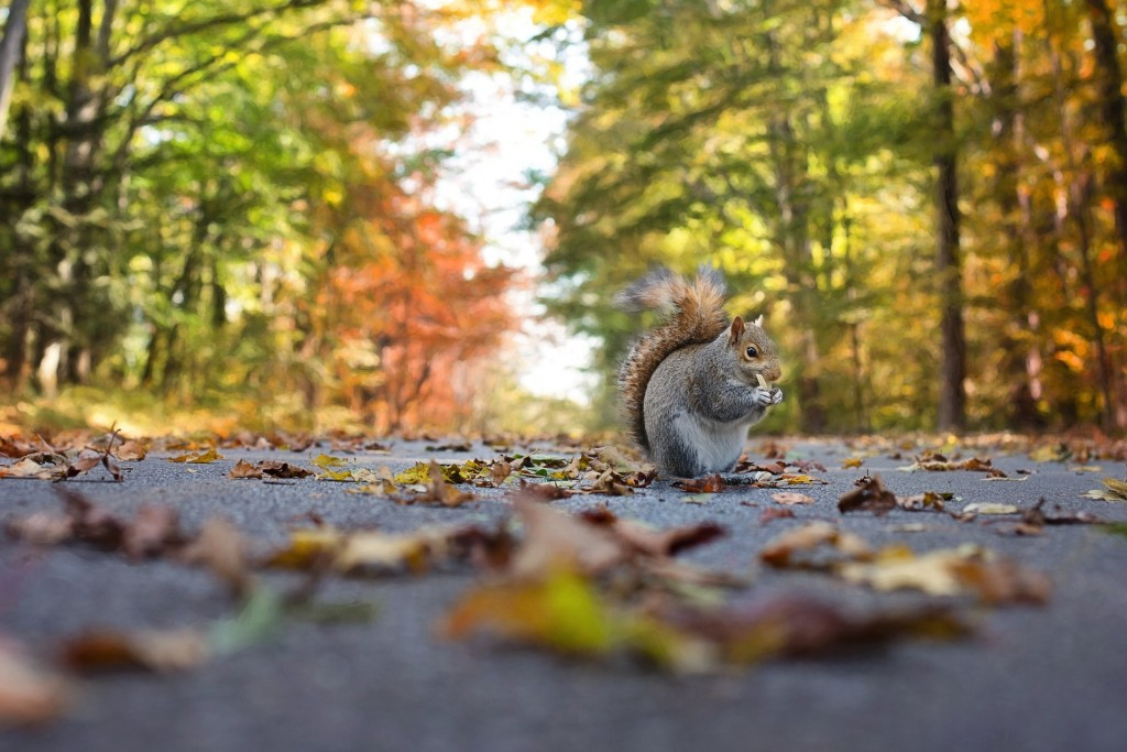 squirrel-1004893_1920